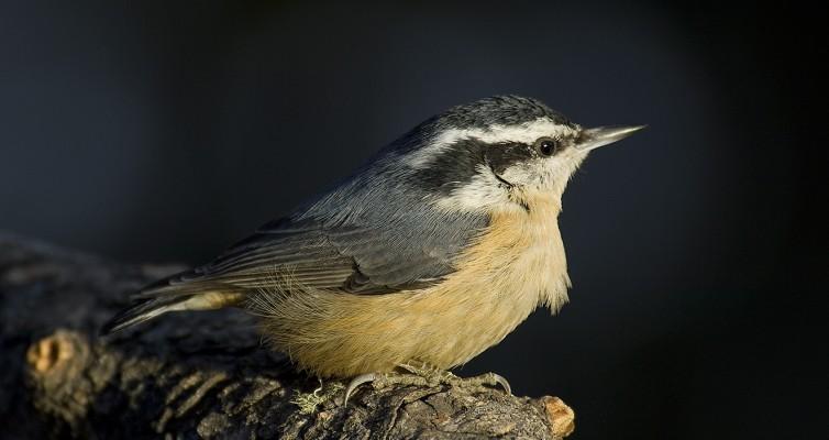 Chautauqua: Birds of Florissant Area